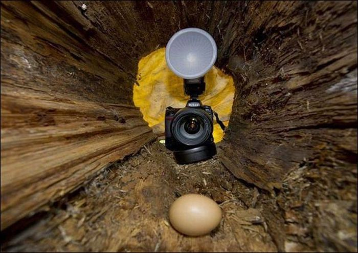Воровка яиц (4 фото)