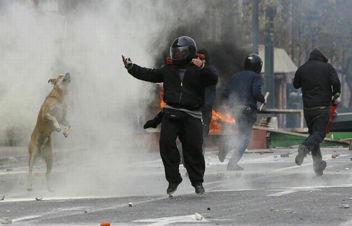 Анархия в Греции: оппозиционеров вдохновляет собака Сосиска (14 фото)