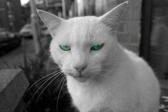 Коты с пренебрежительным взглядом (12 фото)