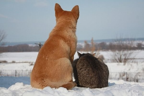 Лучшие друзья (6 фото)