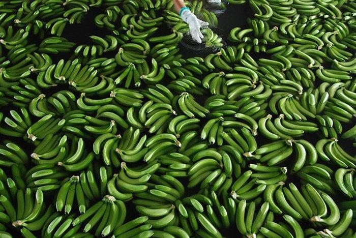 Банановая история (24 фото)