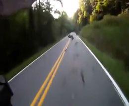 Опоссум атаковал мотоциклиста