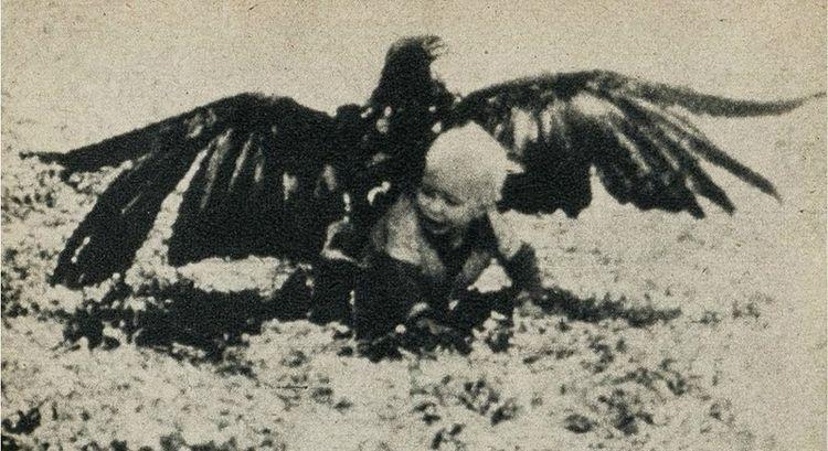 Орел - это аист наоборот (3 фото)