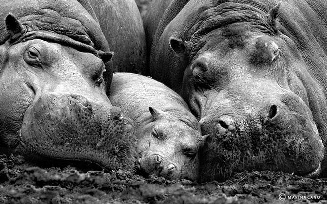 Мир дикой природы от Марины Кано (20 фото)