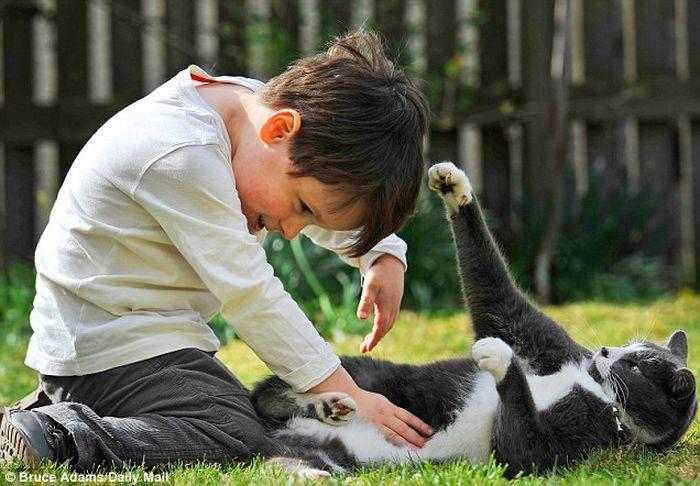 Бездомный кот помог больному мальчику (6 фото)