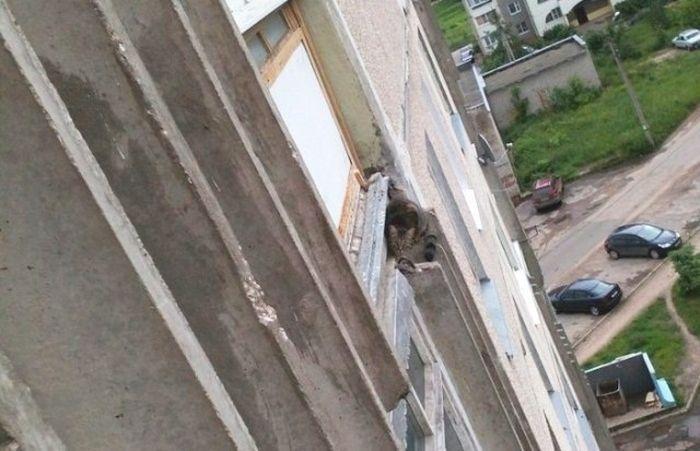 Спасение кошки, застрявшей на 7 этаже (5 фото)