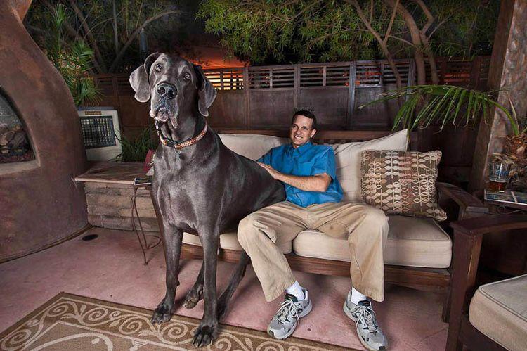 Собака-великан (12 фото)