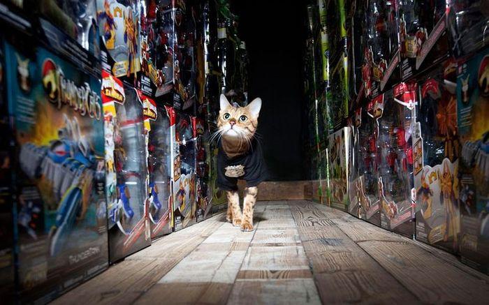 Кот охраняет склад с игрушками (4 фото)