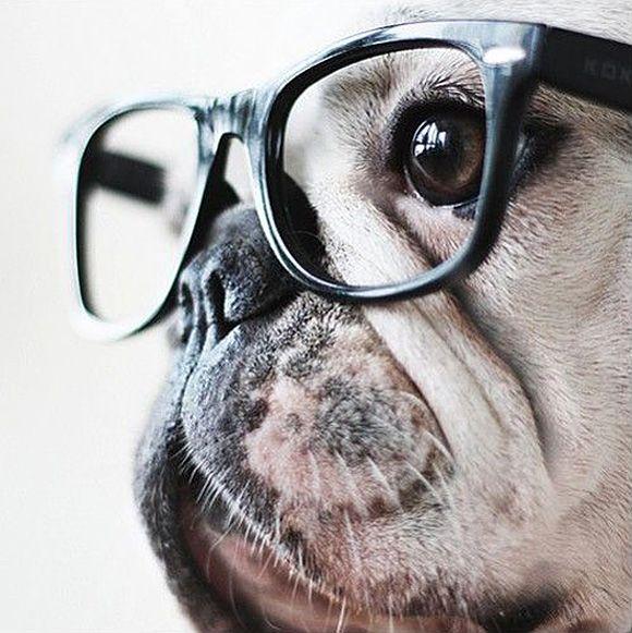 Смешная картинка собаки в очках, открытки