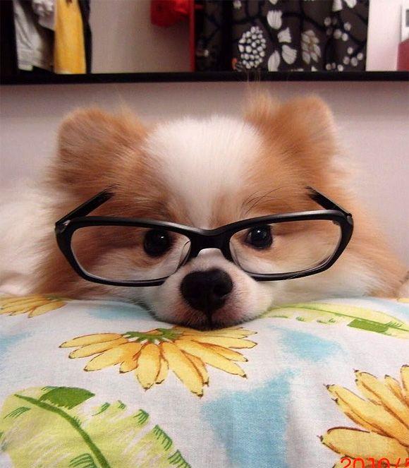 Классному руководителю, смешная картинка собаки в очках