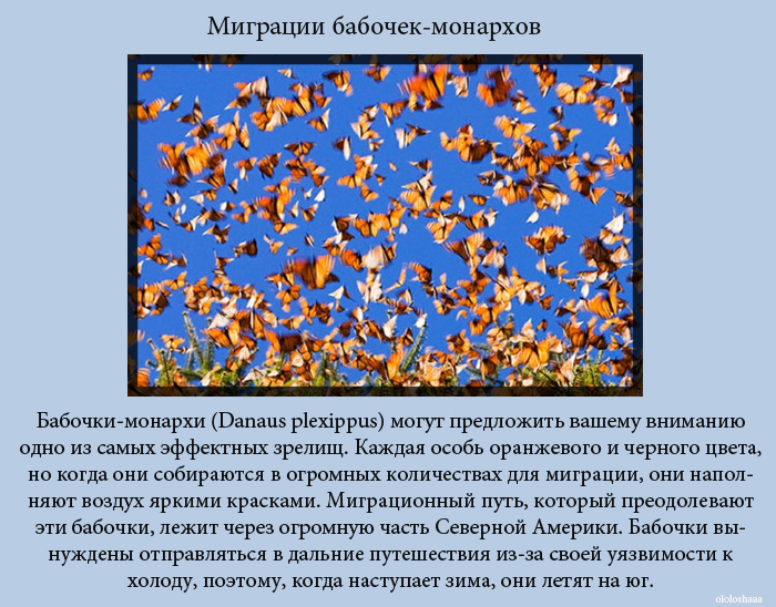 Зрелищные явления природы (10 фото)