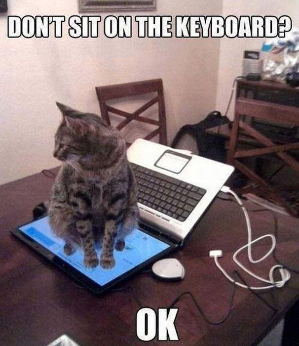 Бесплатный фотоприкол кот, кошка, ноутбук
