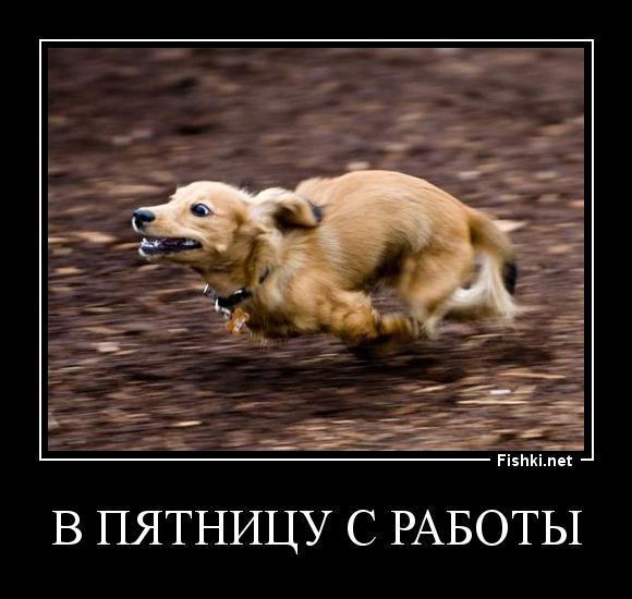 http://fishki.net/picsw/062013/03/dfn/e0b1adf69e3648ff097db333ed5cd20c.jpg