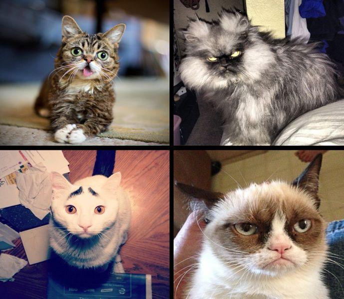 Коты через интернет