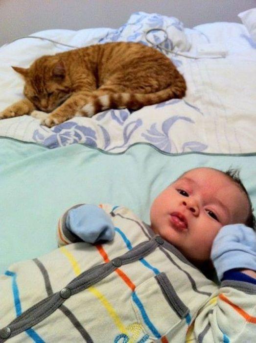 Свежий фотоприкол кот, кошка, ребенок