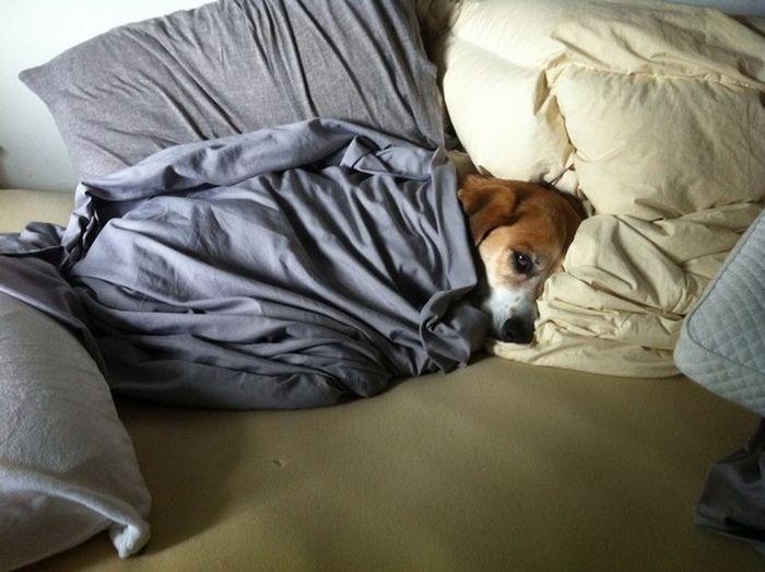 Смешная фотогалерея собака в кровате