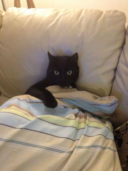 Фотография кошка, черный кот