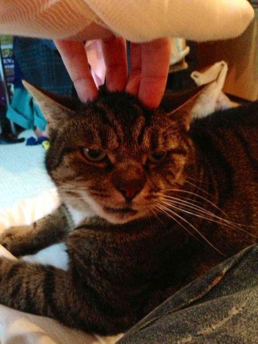 Фото онлайн кот, кошка