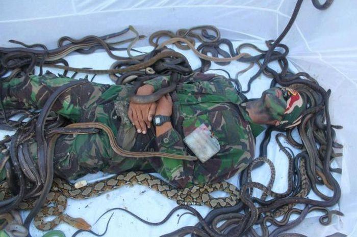 Фотография змеи, змея