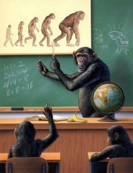 Фотожесть обезьяна, эволюция