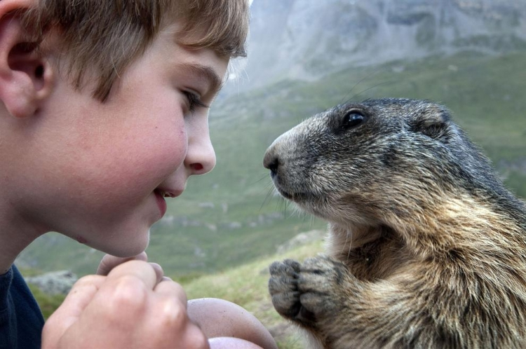 дети, животные, трогательное, доброе, истории