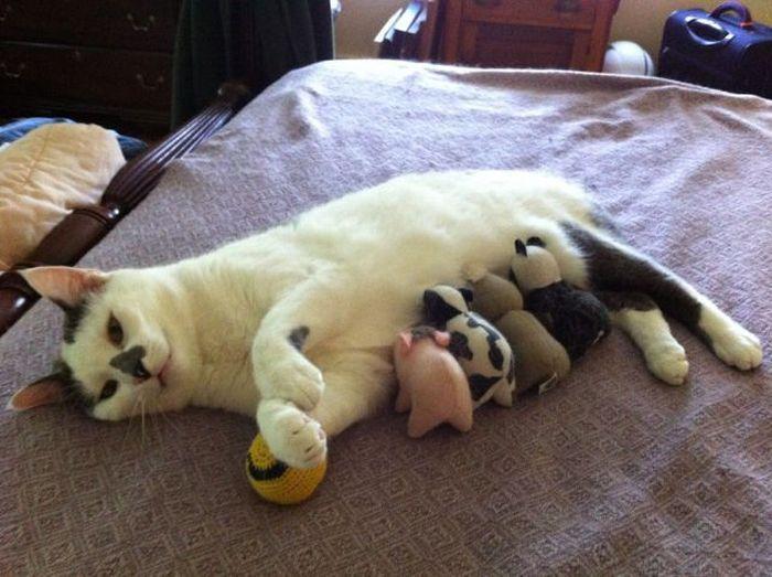 Новые фото кошка