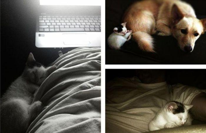 Фото онлайн кот, кошка, ноутбук, собака