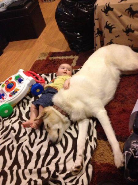 Фотожесть ребенок, собака