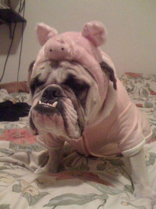 Фотоприкол онлайн клыки, собака