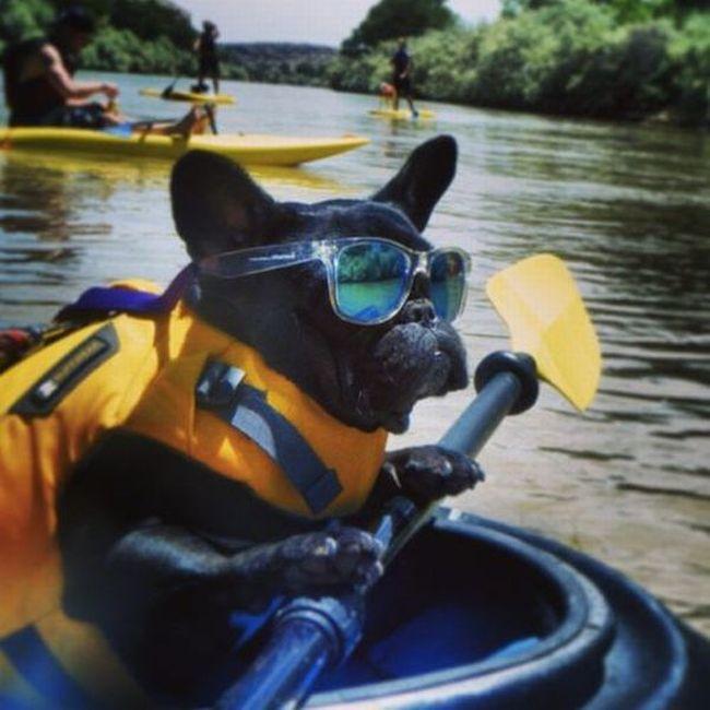 Фотоприкол фото очки, собака