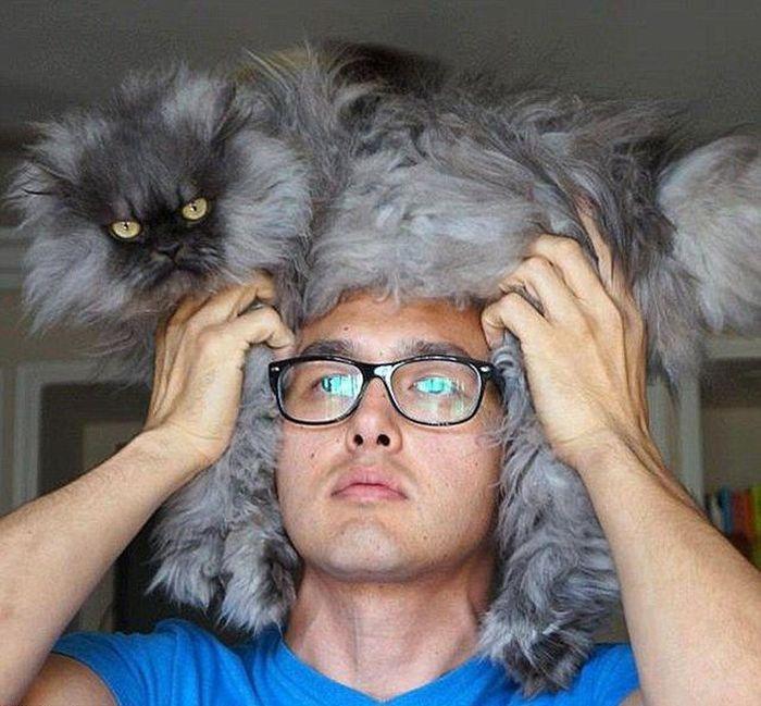 Пикантный фотоприкол кот, кошка, очки