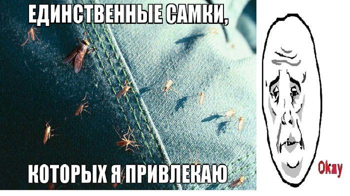 Фотожесть джинсы, комар