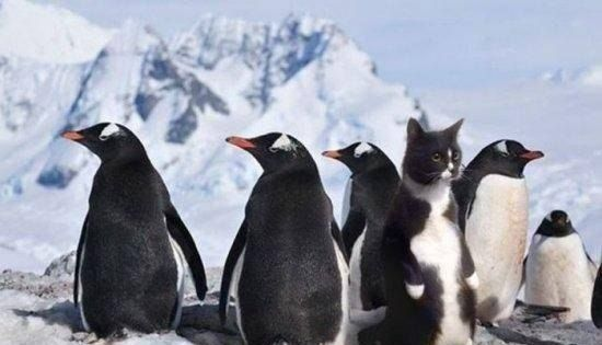 Фотоприкол дня кот, кошка, пингвин