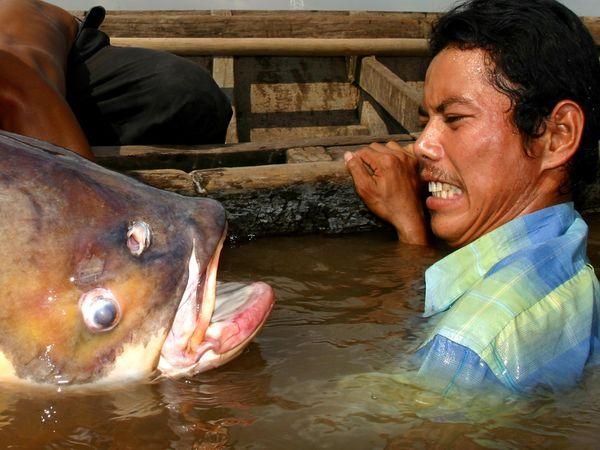 улов, рыба, рыбак, рыбалка