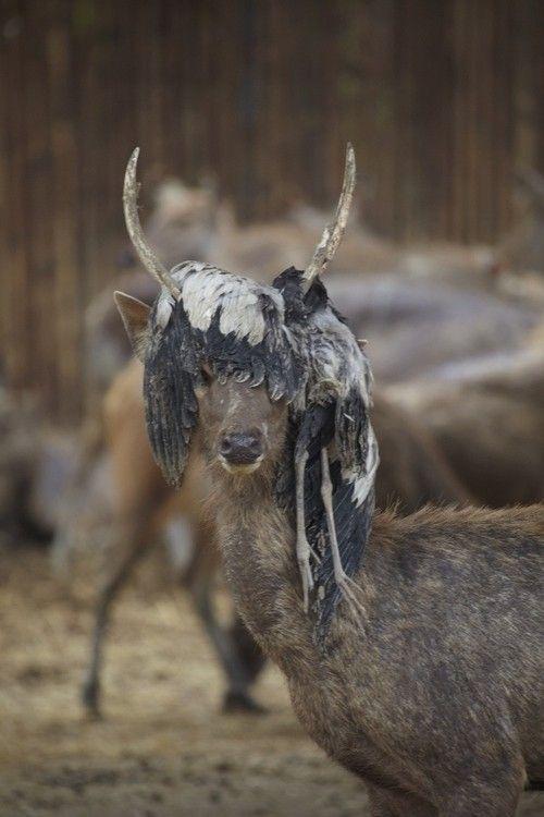Фотография добыча, олень, птица, рога