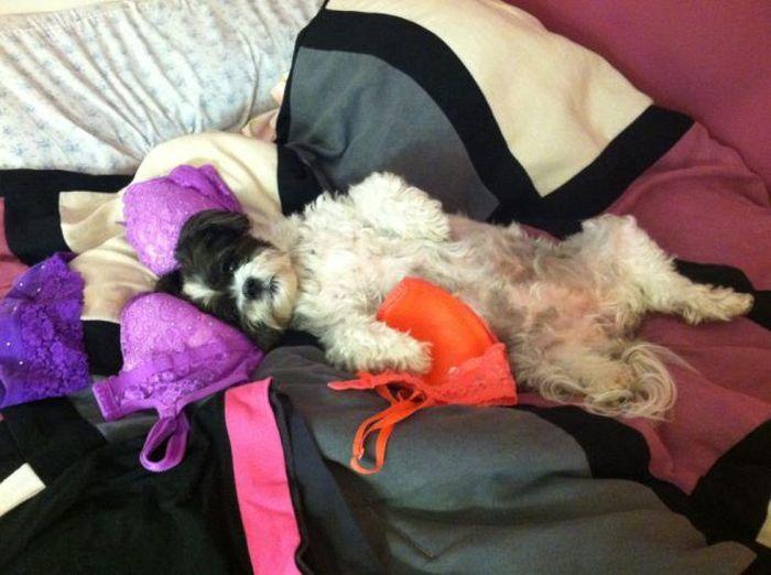 Фанни фото белье, пес, постель, собака