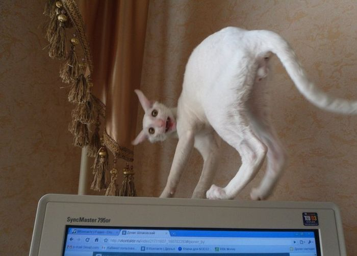 Фанни фото выражение лица, кот, монитор, прикол