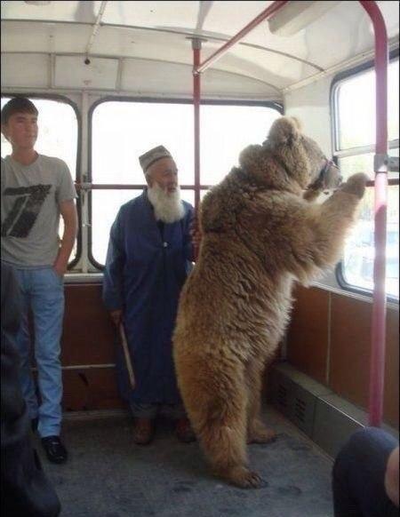Фото автобус, медведь, старик