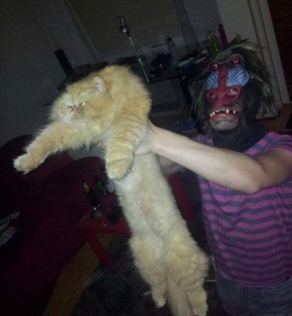 Фото кадр из фильма, король лев, кот, прикол