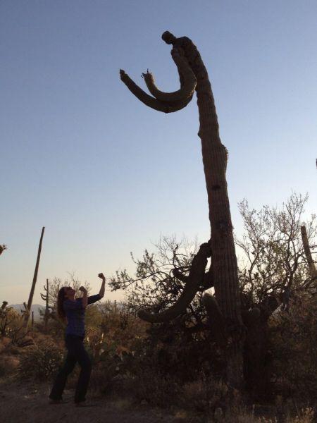 Фотоприкол девушка, кактус, кулаки, растение