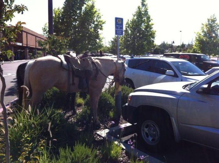 Фото онлайн лошадь, парковка, стоянка