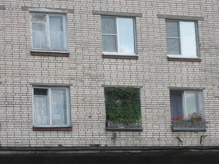 Юмор заросли, окно, растение
