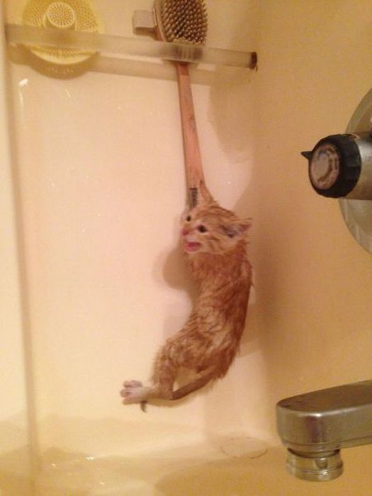 Фотоприкол онлайн бесплатно боится, вода, котенок, прикол