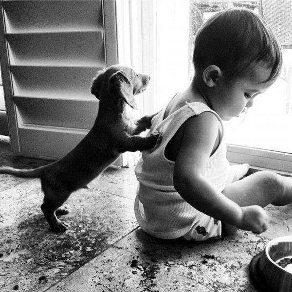 Бесплатно фото малыш, ребенок, собака, щенок