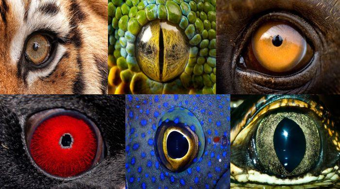 глаз, животное