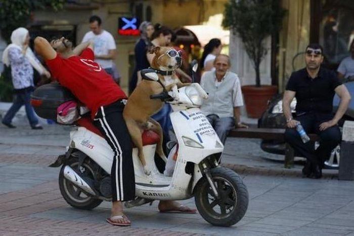 Улетное фото мопед, скутер, собака за рулем