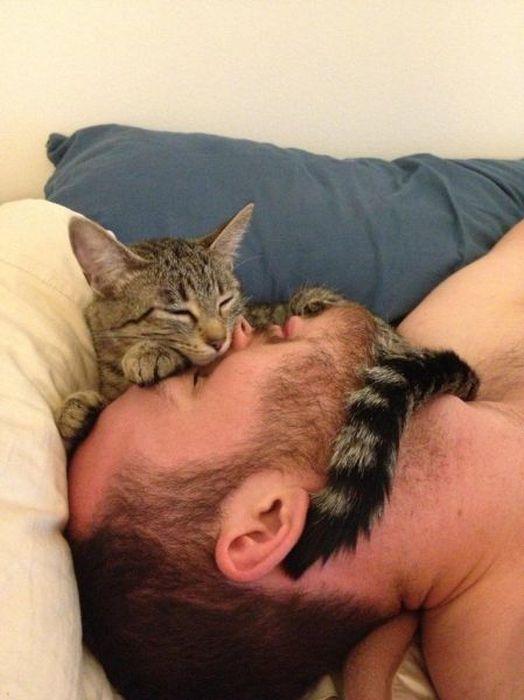 Юмор кошка, мужик, на голове, спит
