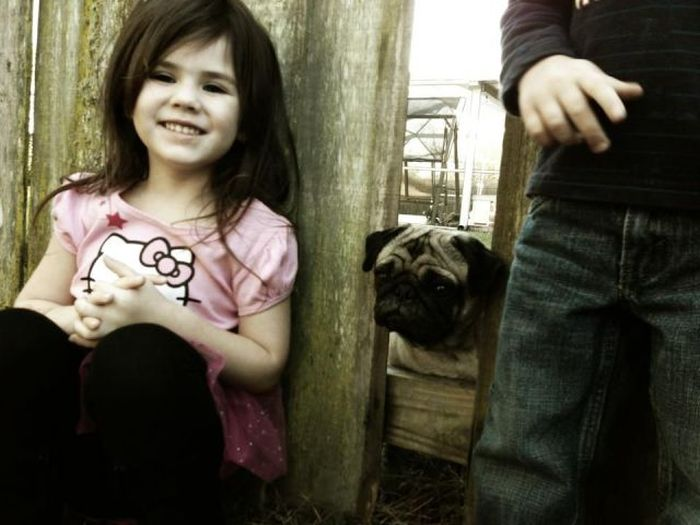 Фотожесть высунула, голова, девочка, собака