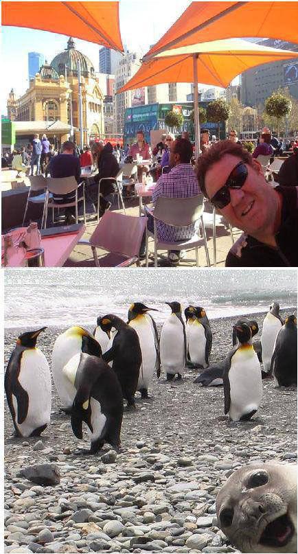 Смешные картинки пародия, пингвины, прикол, сравнение