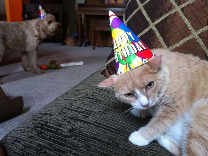 Фото онлайн день рождения, кот, праздник